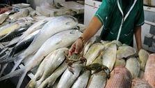 آخرین قیمت ماهی در بازار امروز (1399/12/16) +جدول